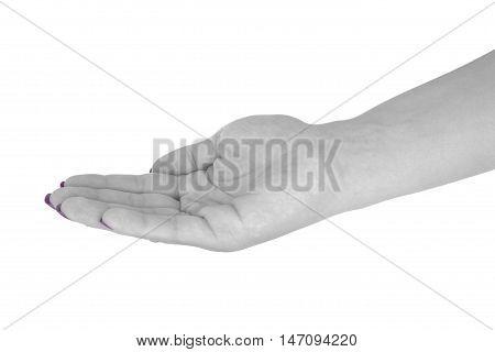 Open hand showing something, middle-aged female's skin, magenta manicure. Isolated on white background.