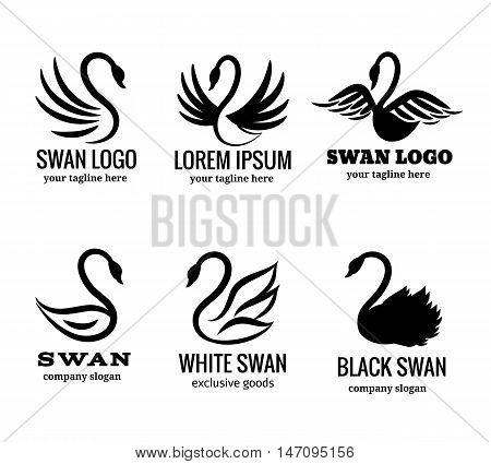 Swan logo set of white or black swan logotypes vector illustration