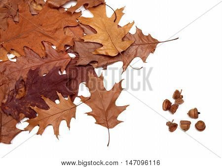 Autumn Dried Leafs Of Oak And Acorns