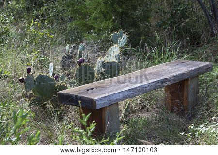 Wooden bench with prickly pear cactus on hiking trail rest area.