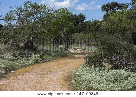 A winding hiking trail in the Texas Hill Country.