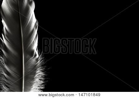 Feathers In The Dark. Light Falling On Beautiful Feathers. Great Plan. Can Be Used For Presentations
