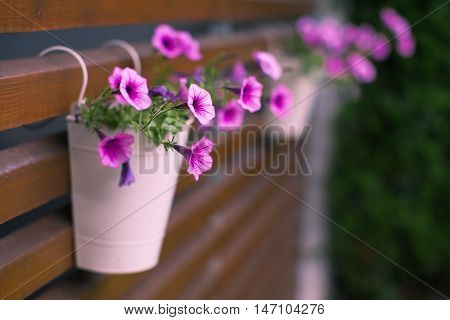 Lilac flowers of a petunia in a pot on wooden laths on the street