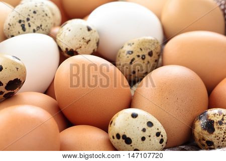 Close up shot of fresh quail and chicken eggs on farmer's market.