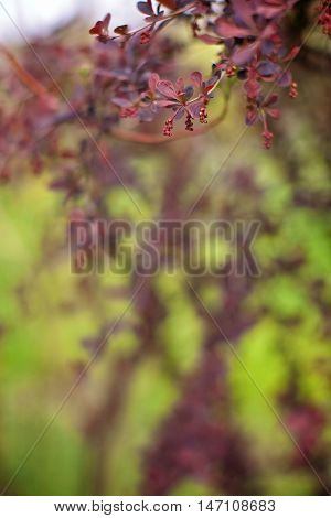 Branch of a spring tree with claret flowers and leaves close up