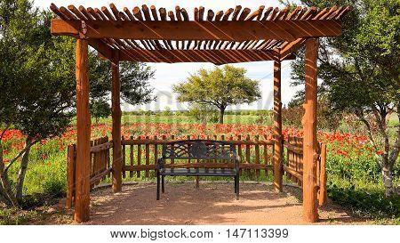 Bench in shade under canopy in Texas flower garden