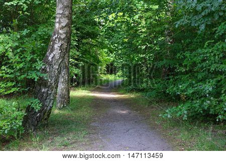 Shot of a forest and a path through the forest. Photo taken through the trees.