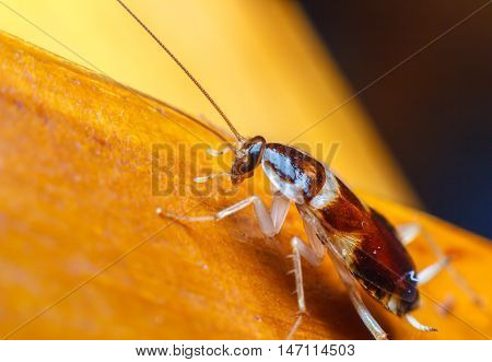 A cockroach on the wooden floor close-up