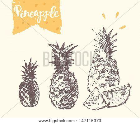 Hand drawn pineapple, vector illustration, sketch draw
