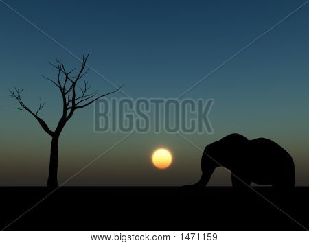 Elephant Sunrise 19