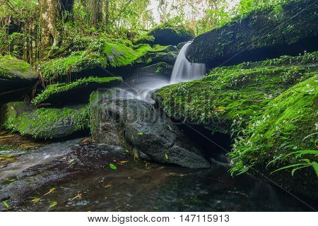 Landscape of waterfall in deep rain forest of Bolaven Plateau Champasak with green mos and small white flowers.