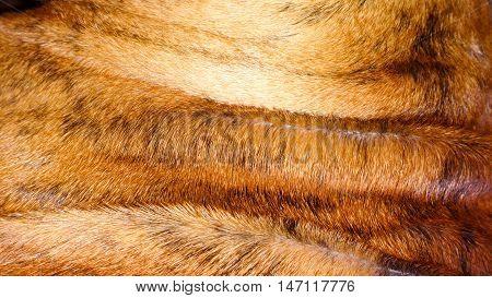 Boxer Dog Hair Close Up