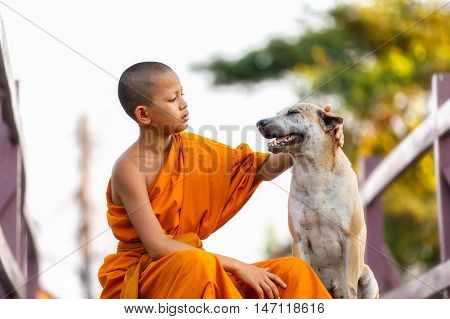 Novices playing stray dog with kindness on wooden bridge in sunset time