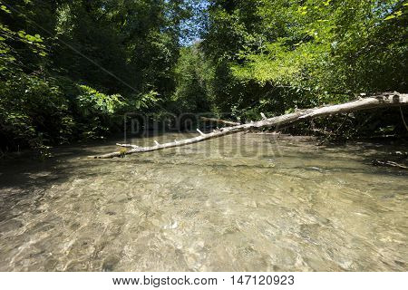 fallen tree branch across a small river