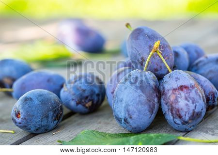 Plums. Blue and violet plums in the garden on wooden table.