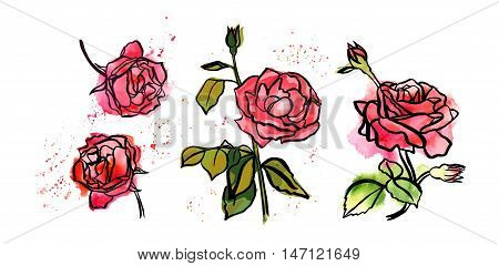 A set of freehand ink and watercolor drawings of roses, with blooming flower, buds, and green leaves, with splashes of paint. Scalable vector graphic on white background