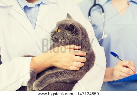 medicine, pet, animals, health care and people concept - close up of veterinarian doctor with british cat and assistant with clipboard taking notes at vet clinic