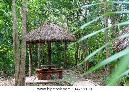 Jungle Palapa Hut Sunroof In Mexico Mayan Riviera