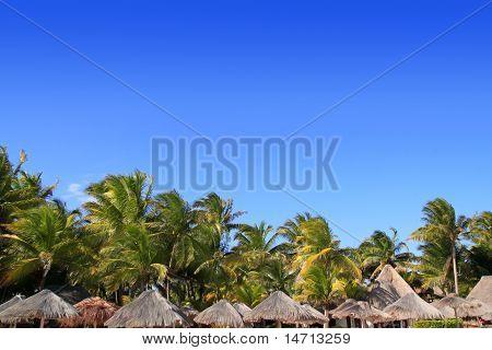 Playa Del Carmen Tropical Palapa Palm Trees Mexico