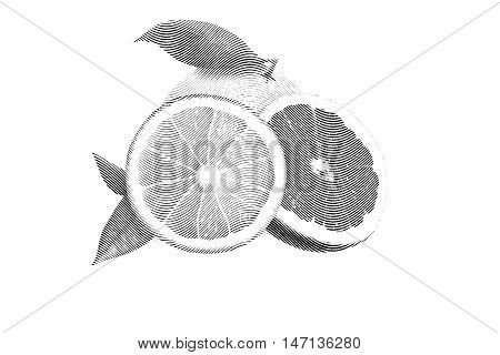 Drawn Sketch painting color orange and grapefruit painting on white background. Illustration of fruit orange with leaves and grapefruit Black and white
