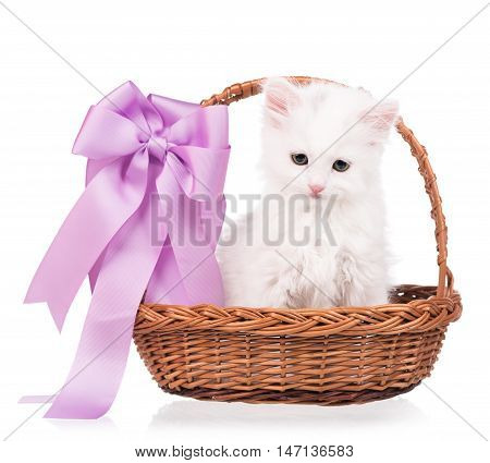 Cute siberian kitten in a wicker basket isolated on white background