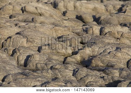 Sea side rock surface at Hermanus Western Cape Province South Africa