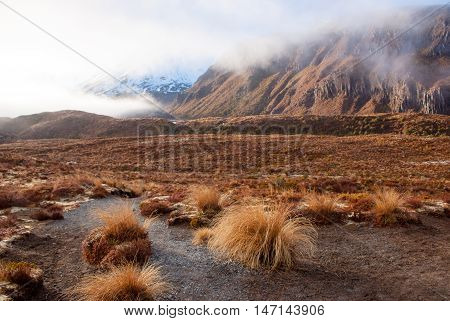 At Footspets Of Volcano In Tongariro National Park