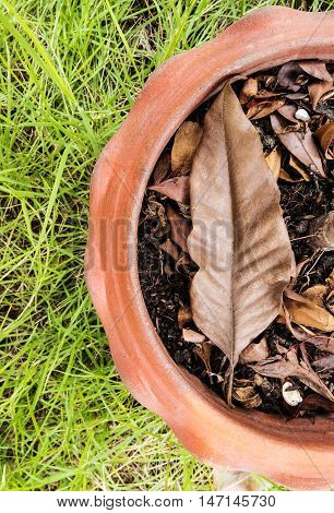 Close-up dried environment with leaf in tree pot on contrast fresh environment green grass