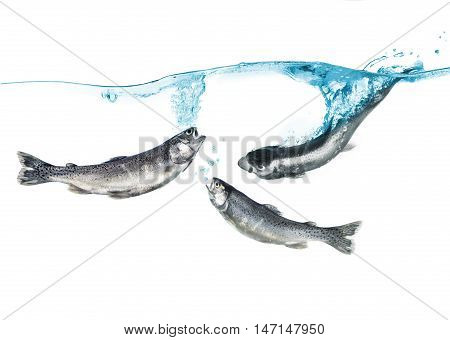 trout in the water isolated on a white background