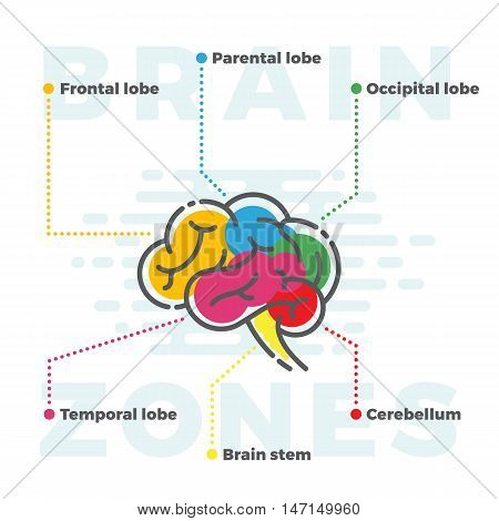 Brain Zones Scheme. Colorful Infographics of Different Lobes in Line and Flat Style. Isolated.