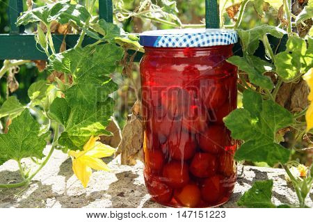 Jar with delicious red plum compote against the backdrop of greenery