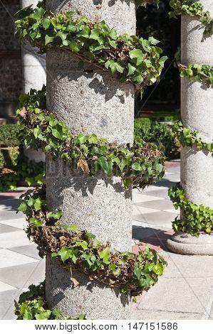 Ivy and pergola. Photo taken in Cecilio Rodriguez Gardens, Retiro Park, Madrid, Spain