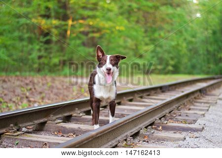 dog lying on the rails, selective focus
