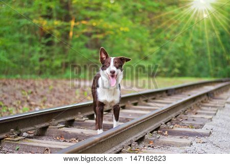 Dog standing on the rails. selective focus