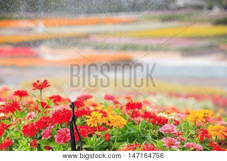 sprinkler head watering the flower natural background