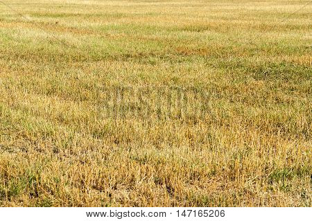picture of a full frame stubble field