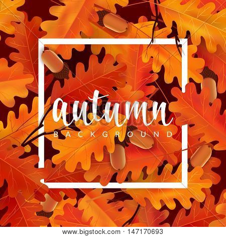 Autumn background with oak leaves and acorns. Vector illustration with border and lettering