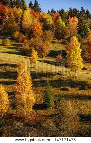 mystery autumn landscape with yellow trees and falling leaves, natural background