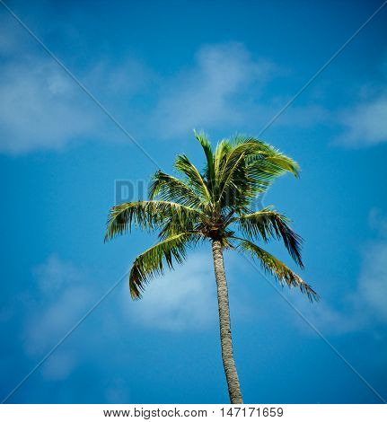 Beauty Green Alone Palm Tree on Blue Sky and Weightless Clouds background Outdoors
