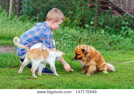 Little Boy Feeds The Stray Cat And Red-haired Homeless Dog
