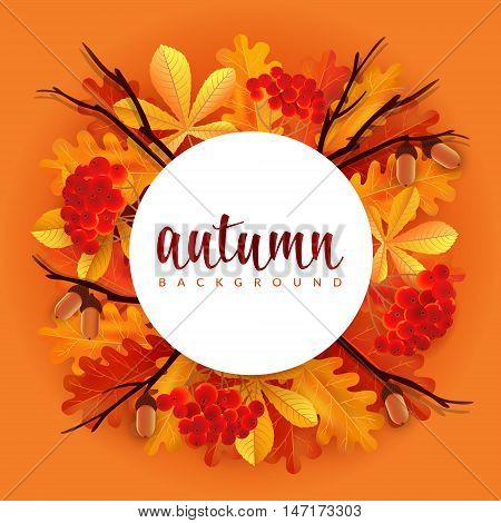 Autumn border with oak and chestnut leaves, rowans and acorns. Vector illustration with round border and lettering