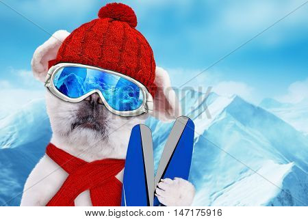 Dog wearing ski goggles relaxing in the mountain.
