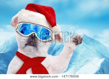 Dog skier in red Christmas hat wearing ski goggles relaxing in the mountain.