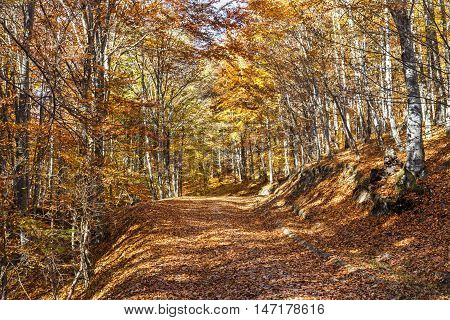 Beautiful colorful autumn road with yellow leaves in Transylvania