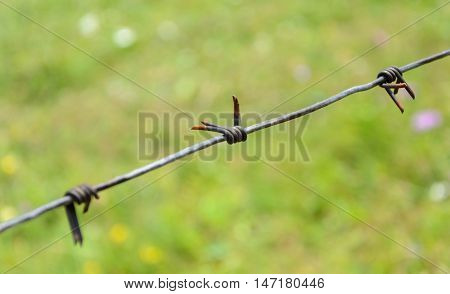 Old rusty barbed wire on a green background