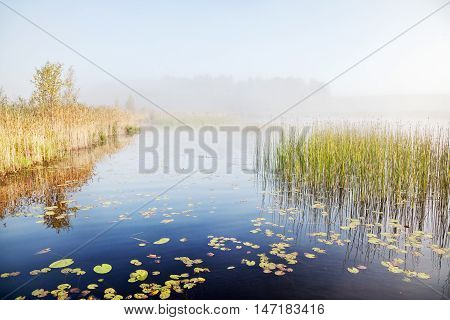 Mist on a lake at dawn. Summer landscape