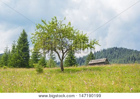 The tree and old house in the mountains