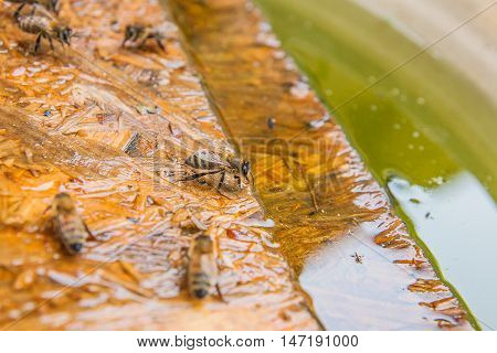 Bees Drinking Water On The Wooden Plank At The Summer.