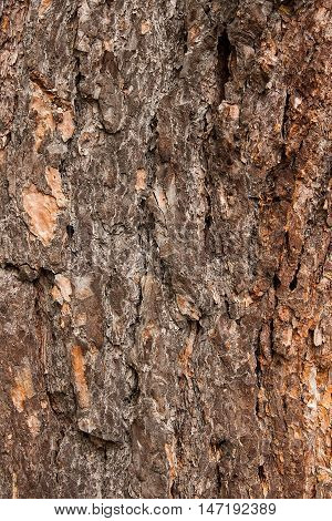Bark Texture Background Pattern Crack Old Brown For Design