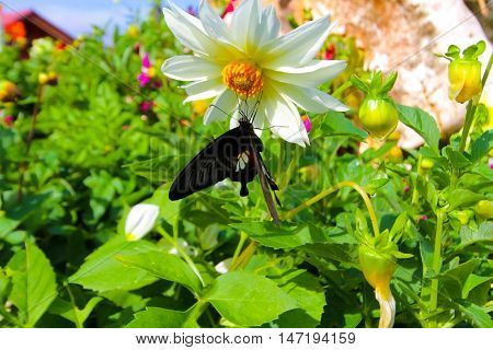 flowers with butterfly in the garden .